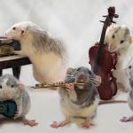 Внимание! Запись на сольное пение и гитару